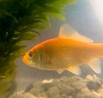 Bob aka The Fish